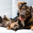 animal-cão-gato-cachorro-adotar-família-doar-adoção-brinquedo-raça-mãe-cadela-profissional-idade-alimento-crianças-cães-e-gatos-cães-gatos-5