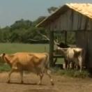 leite-producao